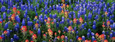 Field Of Texas Paintbrush And Bluebonnets... facebook timeline cover 849 X 312 Nature/Landscape,Inks,Texas,Bluebonnets,Paintbrush,State,Park,Field,Lake,and,Bluebonnets...